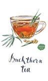 Glass of buckthorn tea Stock Photos