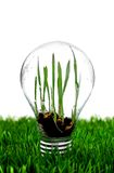 Glass bulb Stock Photos