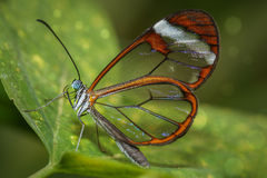 Glass butterfly Stock Image