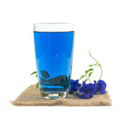 Glass of butterfly pea flower juice on white background Stock Image