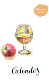 Glass of calvados with red apple Stock Images