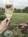 A glass of champagne against garden Royalty Free Stock Photo