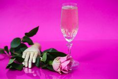 Glass of champagne on pink background with roses Royalty Free Stock Image