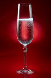 Glass of champagne on red Stock Images