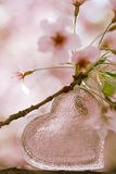 Glass clear heart in Spring with blossom Royalty Free Stock Image