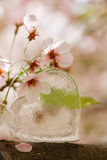 Glass clear heart in Spring with blossom Royalty Free Stock Photo
