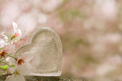 Glass clear heart in Spring with blossom Stock Photos