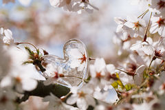 Glass clear heart in Spring with blossom Royalty Free Stock Images
