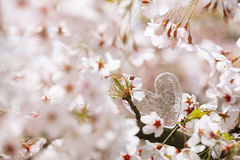 Glass clear heart in Spring with blossom Stock Photo