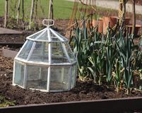 Glass cloche in vegetable garden. Old fashioned glass cloche in raised vegetable garden - deep beds Stock Photography