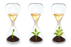 Glass clocks With sprouts, coins. Vector Stock Photo