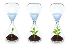 Glass clocks With sprouts and water. Vector Stock Photos