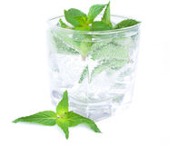 Glass of a cocktail from mint. Isolated on the white background Stock Images