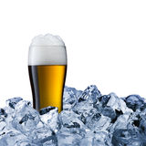 Glass of cold beer Stock Image
