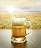 Glass of Cold beer in nature stock image