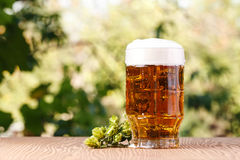 A glass of cold beer Royalty Free Stock Image