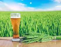Glass of cold beer at sunset on the background of wheat field and blue sky. Recreation and relax. Fresh brewed ale. Royalty Free Stock Photos