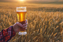 Glass of cold beer at sunset on the background of wheat field and blue sky. Summer landscape. Fresh brewed ale. Royalty Free Stock Photos