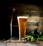 Glass of cold foamy beer,  brown bottle and hops on a dark wooden background. Beer, bottle and hop on a wooden background Stock Images
