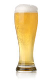 Glass of cold and fresh golden beer Stock Image