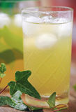 Glass of cold green tea with ice cubes Stock Image