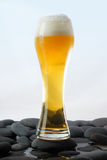 Glass of cold light beer Stock Photos