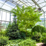 Glass conservatory and plants Stock Image