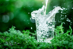 A glass of cool fresh water on natural green background Royalty Free Stock Images