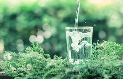 A glass of cool fresh water on natural green background Royalty Free Stock Photos
