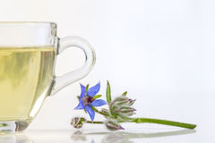Glass cup with borage tea and flowers Royalty Free Stock Images