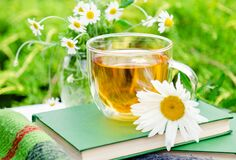 Glass cup of chamomile herbal tea with chamomile flower on books and warm plaid outdoor with nature background in garden. Romantic