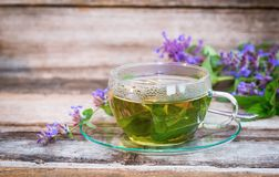 A glass cup of herbal catmint tea stock photography