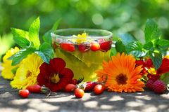 Glass cup with herbal tea Stock Photo