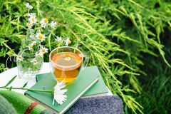 Glass cup of herbal tea with chamomile flower on books, warm green plaid, bouquet of rustic daisies on table outdoor. Cozy home,