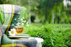 Glass cup of herbal tea with chamomile flower on books, warm green plaid on table outdoor. Cozy home, nature background in garden