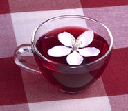 Glass cup of Hibiscus tea Royalty Free Stock Photo