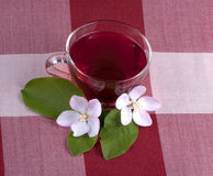Glass cup of Hibiscus tea Royalty Free Stock Image