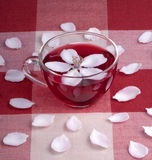 Glass cup of Hibiscus tea Stock Photos
