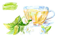 Glass cup of a Jasmine tea. Hot drink image. Watercolor hand drawn illustration Royalty Free Stock Photos