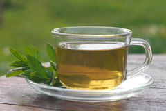 Glass cup of mint tea with mint leaves Royalty Free Stock Photography