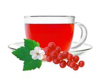 Glass cup tea with fresh currant Royalty Free Stock Images
