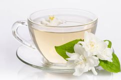 Glass cup of Tea with jasmine flowers and leaves. Over white royalty free stock images