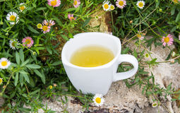 Glass cup of tea Stock Images