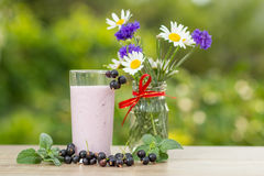 Glass of currant yogurt  with fresh berries of currant and chamo Stock Image