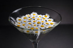 Glass of daisy Royalty Free Stock Images