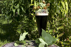 A glass of dark beer Royalty Free Stock Image