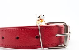 The glass dog on the dog-collar Stock Images