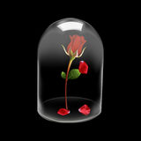 Glass dome cover Rose flower Stock Image