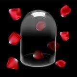 Glass dome and Rose petals Stock Photos