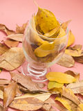 Glass with dry leaves Stock Images